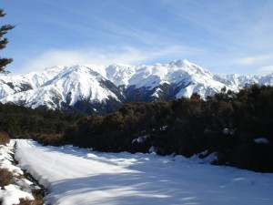 Snow-capped Kawekas from Little's Clearing
