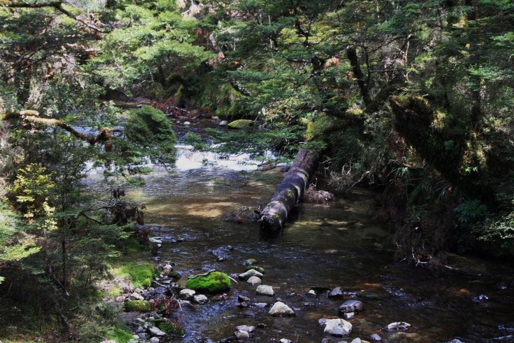 The Tiki Tiki Stream