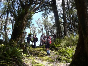 At the track junction for Mangatewainui Stream