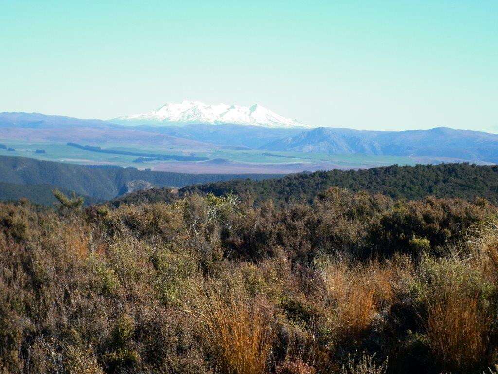 Ruapahu covered in snow on the horizon