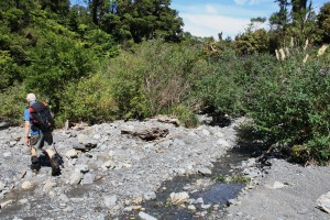 The Buddleia which is throttling the riverbed of Tamaki River