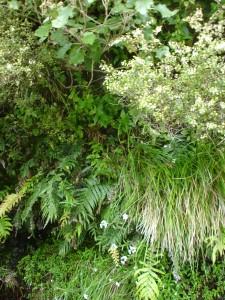 The riverbank flora display