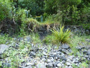 Spot the sign for the track junction up Parks Peak Ridge on the Makaroro River