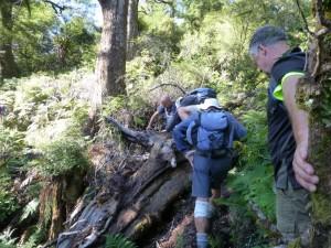 Scrambling around fallen trees