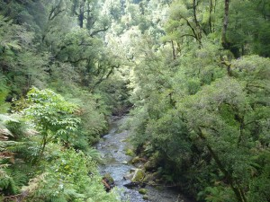 Whirnaki Stream, and the beautiful bush