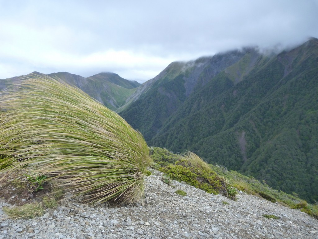The view to Waipawa Saddle, with the tops in cloud, and horizontal tussock