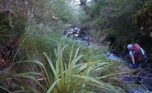The walk back up the tributary to Smith Stream