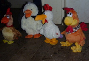 Funky chickens, getting into the groove