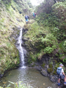 One of the three waterfalls we scrambled past, heading for the exit at Pohangina Saddle