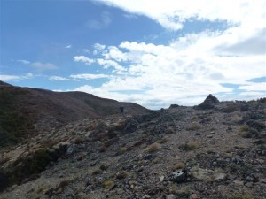 Emerging from the bushline onto the scree slopes