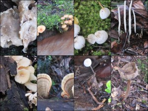 More fungi