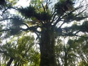 The bush canopy